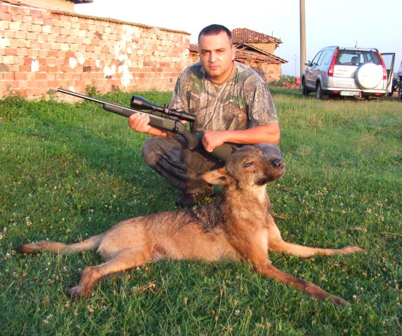 IЛовците от Павликени и Сухиндол изпълняват план за отстрел на 225 диви прасета