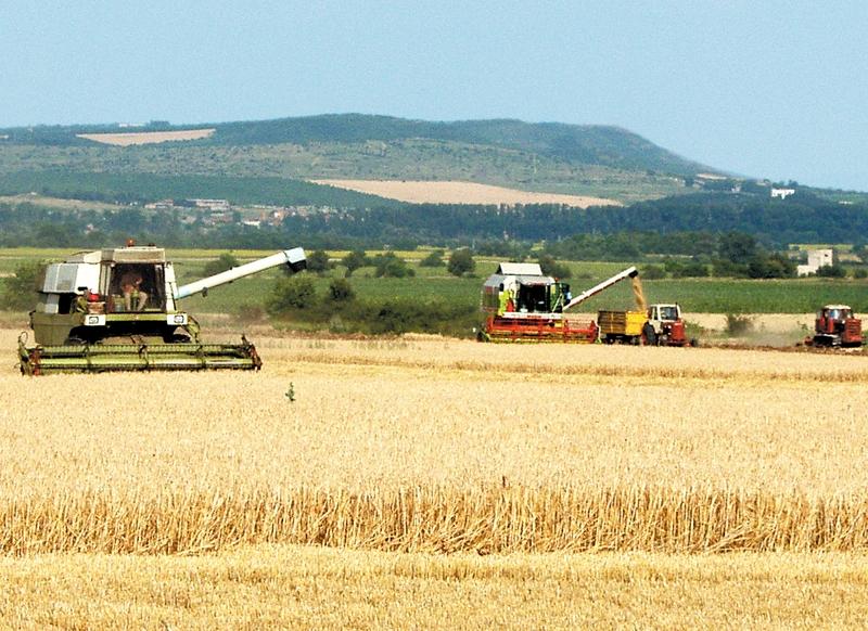 IЖътвата приключи със средни добиви по 460 кг/дка за пшеницата и ечемика